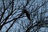 Eagle Take Off (bbosica20) Tags: americanbaldeagle eagles eagle northernamericanbaldeagle