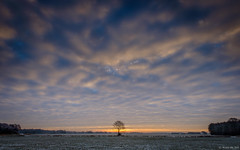 The lonely tree at sunrise (koos.dewit) Tags: depunt drenthe fuji fujixe2 fujifilm fujinonxf1024mm groningen koosdewit ydermade clouds colors colours koosdewitnl lonelytree snow sun sunrise tree trees winter