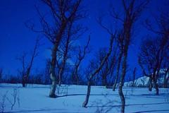 Moonlit Trees (Jason Shorten) Tags: shadow nightphotography snow moonlit moonlight moon stars trees arctic norway europe nikon d5300 nikkor 50mm 2am tromso north