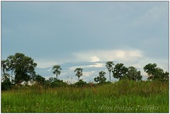 DSC08686PJ_XNV (http://phj.bookfoto.com/) Tags: botswana afrique okavango philippe jubeau delta