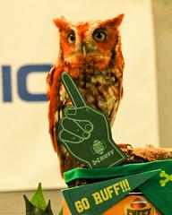 Owl Mascot Team Ruff Puppy Bowl XIII (2) (Scott Yeckes) Tags: animals birds animalportrait animalstill mascot owl portrait puppybowl teammascot voyer animalplanet discoverynetwork