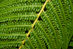 CW176 Ferns (listentoreason) Tags: usa plant fern color green nature closeup america canon unitedstates pennsylvania favorites places longwoodgardens pteridophyta ef28135mmf3556isusm score30