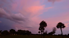Sunset Sky (Jim Mullhaupt) Tags: pink blue sunset red wallpaper sky orange sun storm color tree rain weather silhouette yellow clouds landscape gold evening nikon flickr sundown wind florida dusk palm exotic p900 tropical coolpix thunder bradenton endofday mullhaupt cloudsstormssunsetssunrises nikoncoolpixp900 coolpixp900 nikonp900 jimmullhaupt