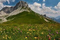Almwiese_Vorarlberg_Austria (b.stanni) Tags: flowers mountains nature berg landscape austria österreich outdoor natur wiese blumen berge mount landschaft wandern