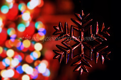 131noel fond (Fotograf nunta Constanta - Servicii foto si video ) Tags: christmasornaments productphotography forchristmas christmasbackground decorationsdenoel magicchristmas fotografieprodus magiedenoel craciunmagic magischesweihnachten ornamentedecraciun weihnachtsverzierungen noelfond weihnachtenhintergrund