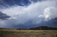 A Front Moving Through (Kim Tashjian) Tags: horses clouds july sumer thunderstorms montaa
