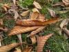 20161025_091924 (vale 83) Tags: autumn leaves nokia n8 macrodreams lunaphoto thebestyellow flickrcolour autofocus friends
