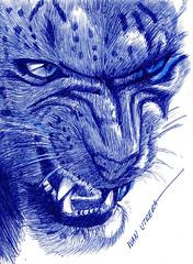 leopardo de las nieves a lapicero (ivanutrera) Tags: leopardodelasnieves draw dibujo drawing dibujoalapicero lapicero wild wildlife sketch sketching dibujoaboligrafo