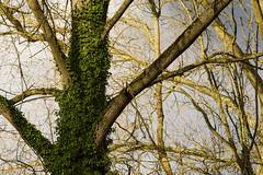 20170104-_IMG1009-Edit (fleetingphotons) Tags: pentaxk1 smcpentaxa200mmf28ed wasingestate fishing warrenbeat kennet trees