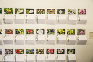 Flower Charts Sorting the Names of Guantánamo Detainees by Country