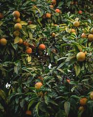 Fruits (balintmolnar1) Tags: rome beautiful streetphotograhpy lumixgh4 gh4 canon colosseum pinokio fountain river fruits guard sunset stairs bnwphotography motor vespa reflection