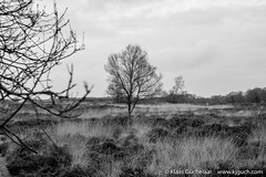 DSCF0155 (Klaas / KJGuch.com) Tags: drenthe netherlands nature natuur decemberwalks walkingindecember naturereserve naturereservation heath blackwhite fujifilm fujifilmxpro2 xpro2 wandeling wandelen hiking outandabout trees