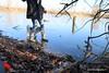 IMG_4895 (sandrinezed) Tags: lake ice dog walkonwater