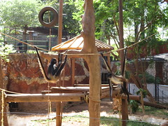 IMG_1346 (kamemex) Tags: メリダ動物園 センテナリオ サル