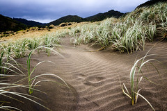 Karekare Beach (rvnix) Tags: newzealand nz auckland travel karekarebeach beach karekare coast wildwestcoast sand blacksand nature grasses