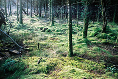 Forest Floor (Simon_Bates) Tags: ireland forest moss trees outdoor green wexford leica m6 35mm agfa summicron conifer 2017 simonbates