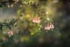 Entry (hploeckl) Tags: entry fairytale fuchsia pentacon vintage sunrays nikon d750