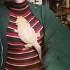 Lizard-sitting. #beardeddragon #lizard (Jenn ♥) Tags: ifttt instagram