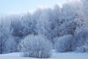 Winter in Lithuania (10) (rimasjank) Tags: winter snow frost cold lithuania lietuva ngc
