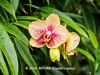 Duke Farms-7013014-2 (myobb (David Lopes)) Tags: dukefarms hillsborough nj newjersey nature olympus em1 omd