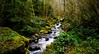Forest Water (jfusion61) Tags: washington mount rainier national park winter waterfall river green cloudy nikon d810 24mm f18