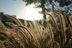 DSC00860 (Praxis Transmutation) Tags: sandiego street sunlight plants bush lookup afternoon sun tree bokeh walk road california closeup winter wind breeze sony a6000 sigma 30mm 28 outside outdoors clear nature