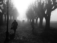 2017 - Angera - Fog (alesalina) Tags: trees 2017 silhouette winter people blackwhite outdoor fog foggy monochrome white light