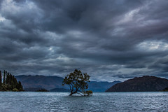 wanaka tree (burd32) Tags: wanaka newzealand tree worldfamous lake nature clouds 24105mm dslr