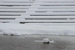 snow stairs... (Dreamer7112) Tags: winter snow 20d schweiz switzerland europe suisse suiza canon20d zurich canoneos20d snowing zrich svizzera zuerich winterwonderland eos20d sihl zurigo latemarchsnow gessnerallee recordsnowfall