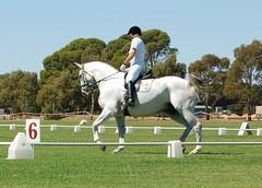Horse Power (Jules) Tags: horses horse southaustralia equestrian dressage strathalbyn