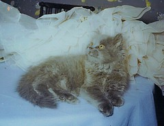 Misty (DayDayDad) Tags: old cute misty cat vintage bag ccc19