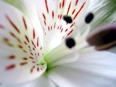 coeur de fleur... - by Mzelle Biscotte
