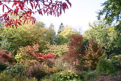 Botanic Gardens in Autumn