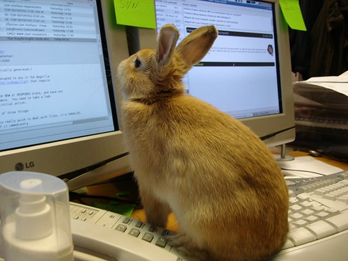 Image of rabbit reading email