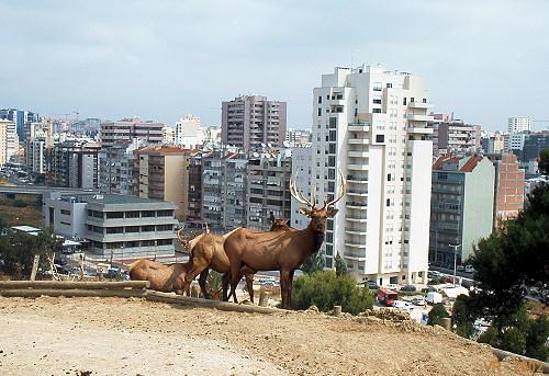 2002_Lisboa_zoo_02