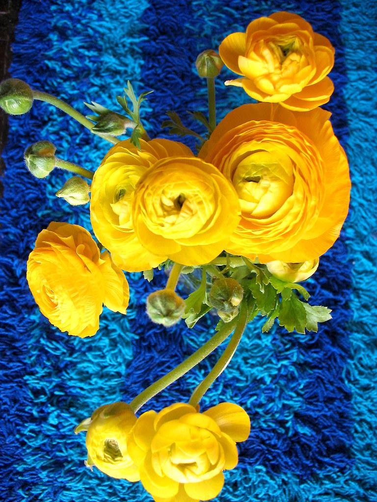 Rugflowers