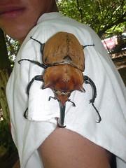 DSC02105, Limon, Costa Rica - by lyng883