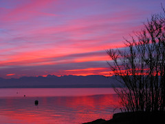 (xim-crow) Tags: pink sunset sky lake water rose sunrise landscape switzerland scenery eau suisse lac ciel paysage lman nyon levdesoleil laclman