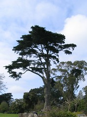 A poem so lovely as a tree (Part Time Mom) Tags: sanfrancisco goldengatepark strybingarboretum