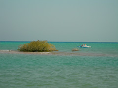 Beach: Sheraton Miramar Resort El Gouna, Hurghada - Egypt (mnadi) Tags: flowers blue sea summer sky holiday flower colour beach water relax warm colours outdoor redsea curves egypt sunny resort arabic clear gouna egyptian styles sheraton ethnic spa miramar hurghada michaelgraves bedouin  nubian elgouna