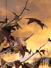 autumn sunset (Vanessa Pike-Russell) Tags: city autumn sunset tree texture interesting rainbow catchycolours vibrant sydney australian australia images cm elite finepix nsw mostinteresting fujifilm popular gong wollongong myfaves illawarra naturesfinest pc2500 s5600 explored criticalmasses cm067 lilcrabbygal vanessapr mootrade vanessapikerussellcom vanessapikerussell auselite