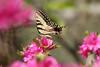 buterfly (mustafasalihoglu) Tags: notpicked