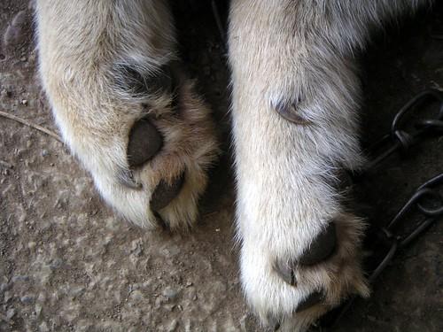 Hachi's legs