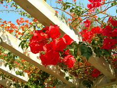 Flowers in Sheraton Miramar Resort El Gouna, Hurghada - Egypt (mnadi) Tags: flowers sunset red summer sky orange holiday flower colour garden hotel warm colours outdoor redsea curves egypt sunny el resort bougainvillea arabic clear gouna egyptian styles sheraton ethnic spa miramar hurghada michaelgraves bedouin  nubian elgouna bougainvilleas