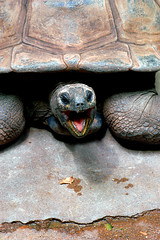 screaming turtle (bea2108) Tags: animal animals zoo turtle