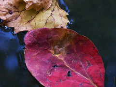 Soft focus beauty to transition to fall