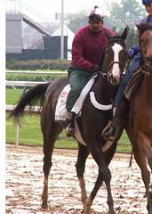 Sweetnorthern Saint (horsestohorsepower) Tags: horseracing oaks derby churchilldowns kyderby dawnatthedowns kyoaks morningworks