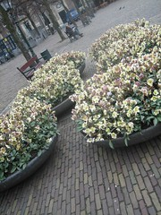 Flower Pots (icelight) Tags: flowers netherlands europe denhaag springbreak thehague