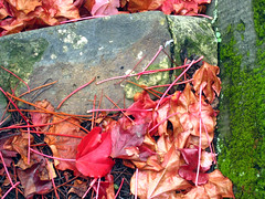 Autumn Leaves (davemelbourne) Tags: autumn leaves melbourne levels