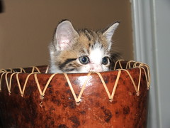 kitty in a bowl